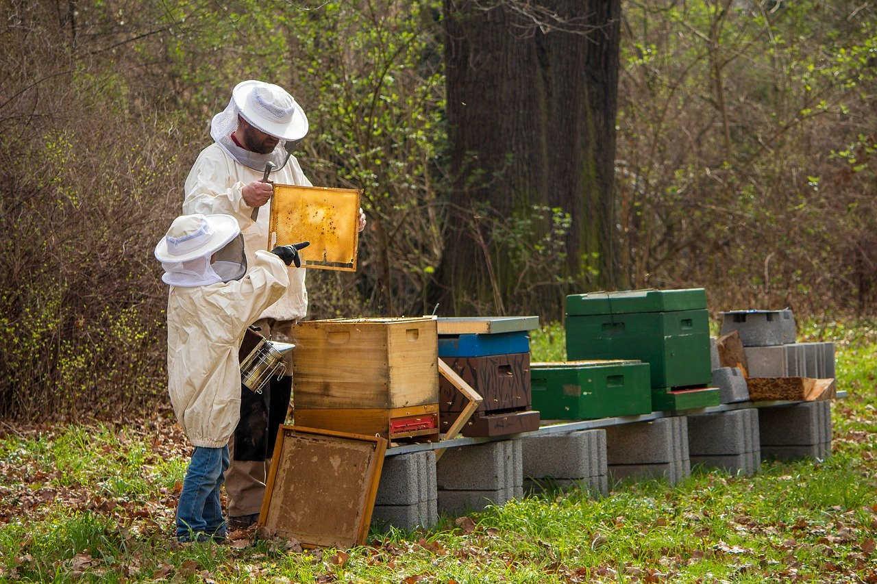 l abeille noire et l'apiculteur